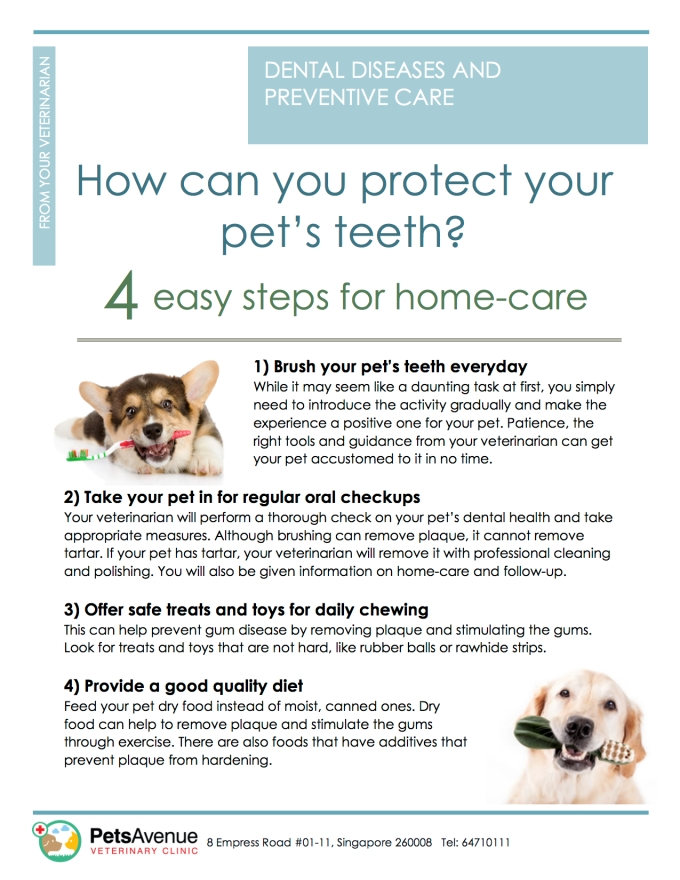 pavc-dental-series-how-can-you-protect-your-pets-teeth