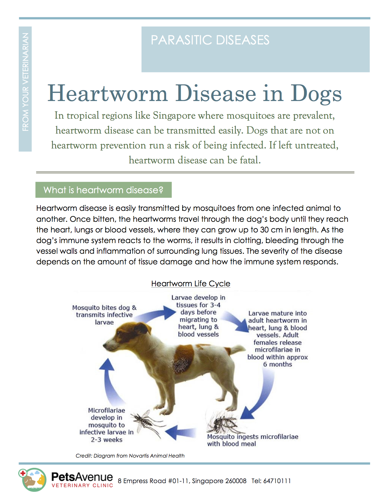 column parasite prevention preventing canine heartworm disease