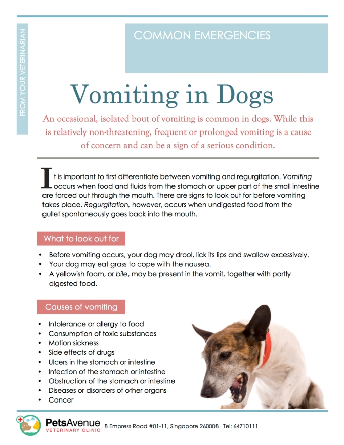 PAVC Common emergencies series - Vomiting in Dogs1