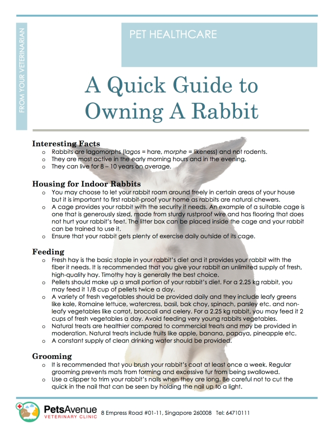 PAVC Pet Healthcare series - Quick Guide to Owning a Rabbit