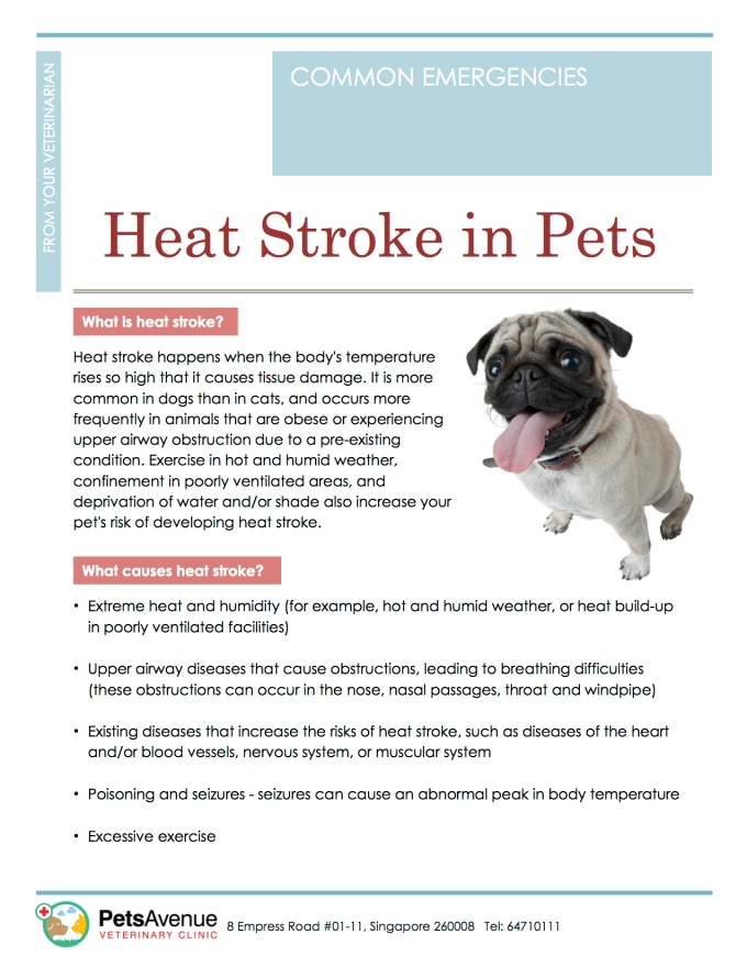 PAVC Pet Common Emergencies series - Heat Stroke