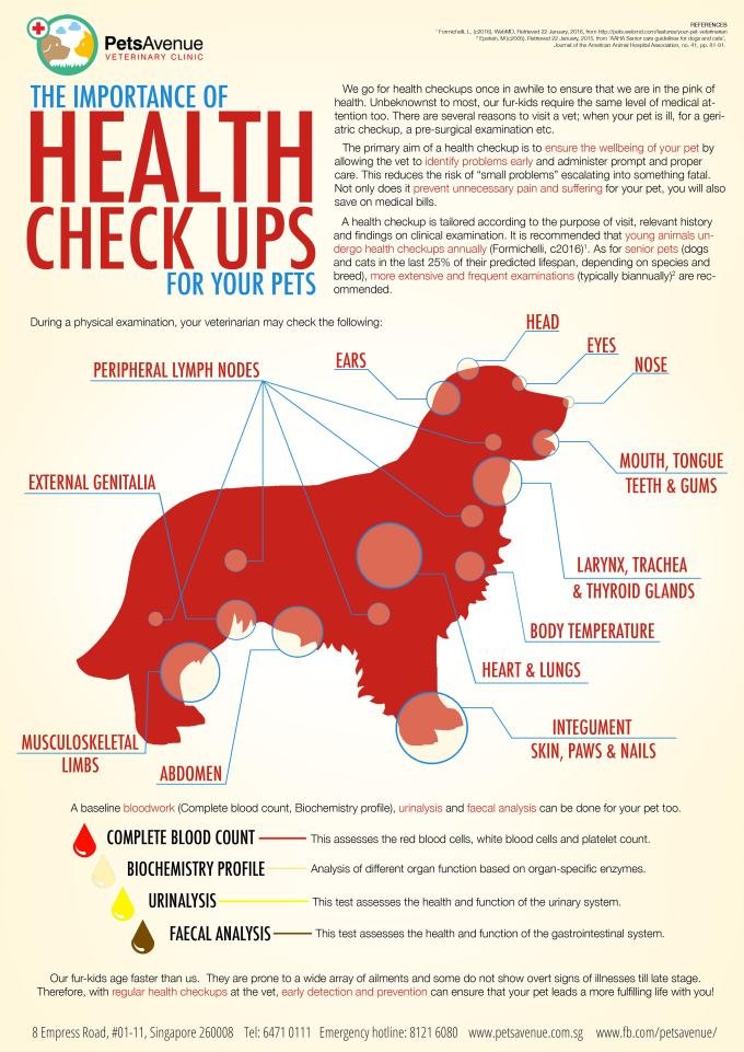 What to Expect at Your Pet'sCheckup