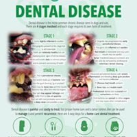 Different Stages of Dental Disease